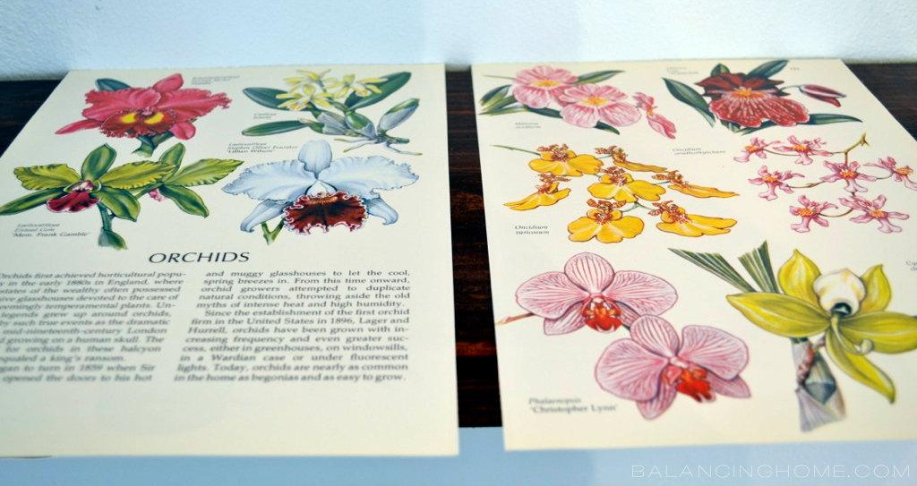 Botanical Prints Book Page