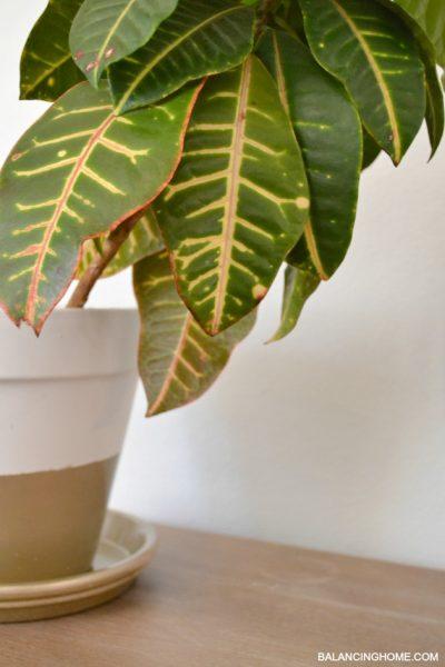 Color Blocked Metallic Terra Cotta Flower Pot
