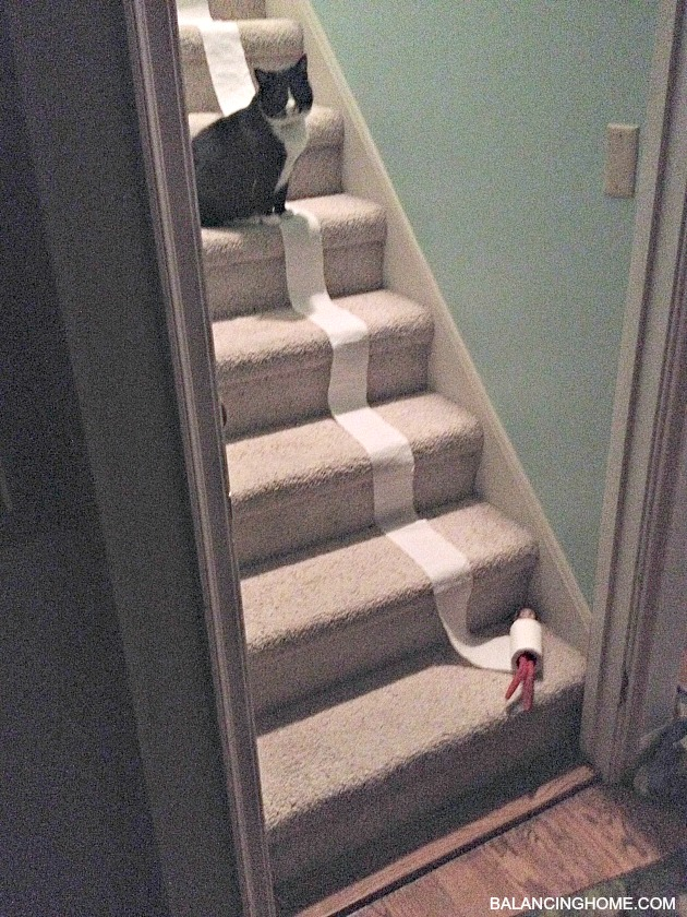 Elf On The Shelf Antics Amp A Few Thoughts Balancing Home