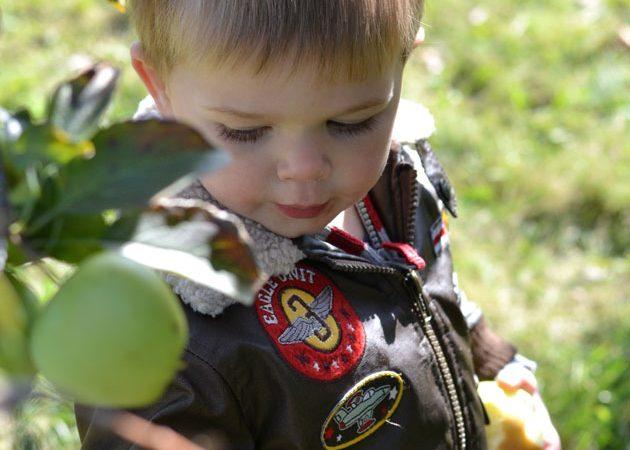 apple-picking-30