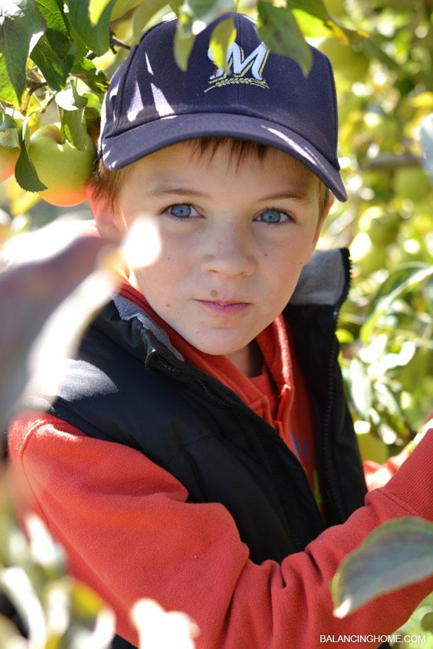 apple-picking-31
