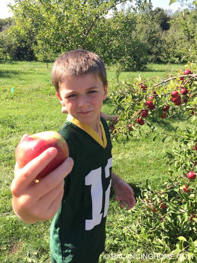 apple-picking-2015-47