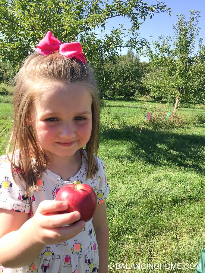 apple-picking-2015-48