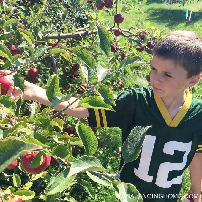 apple-picking-2015-50