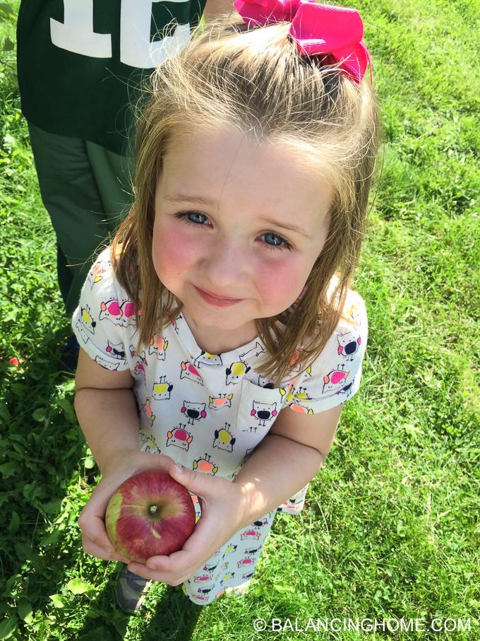 apple-picking-2015-51