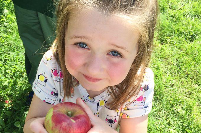 Apple Picking & 15 Apple Recipes