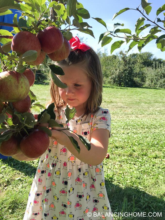 apple-picking-2015-53