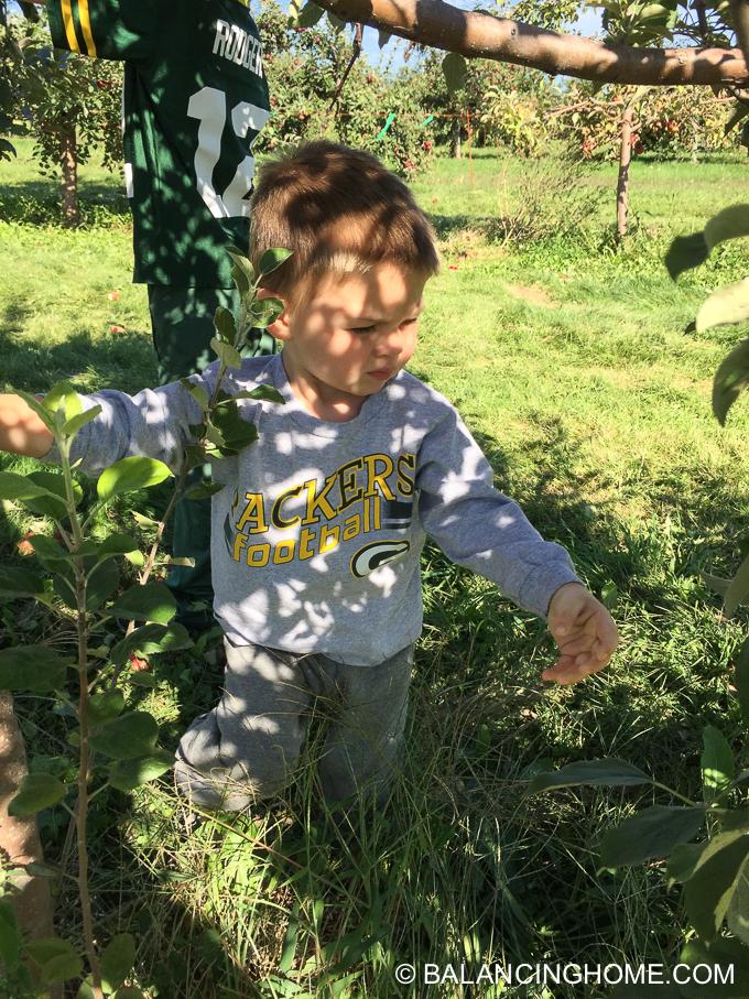 apple-picking-2015-54