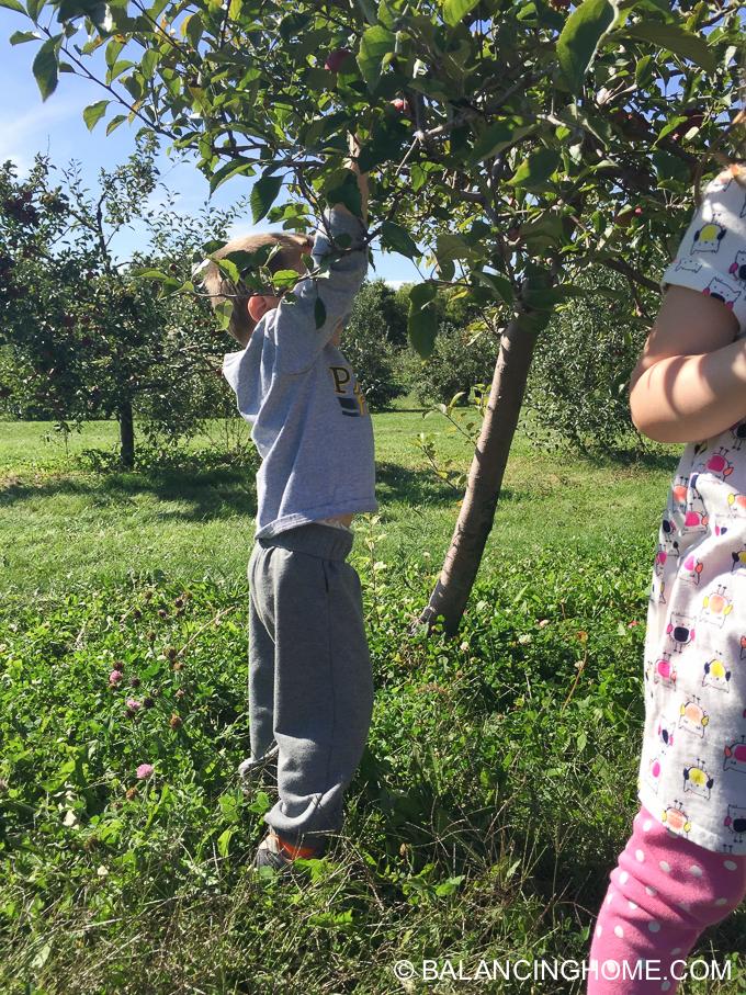 apple-picking-2015-60